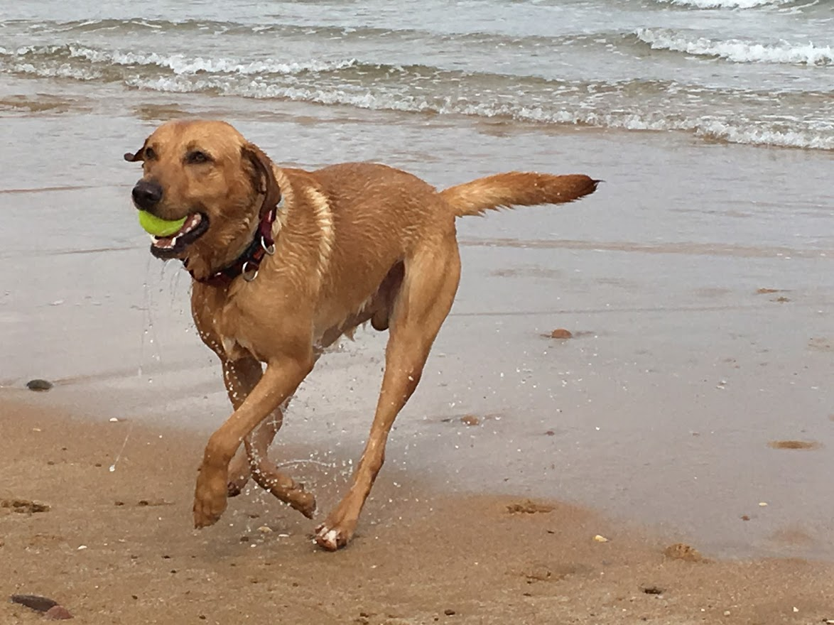 Billy our dog with ball