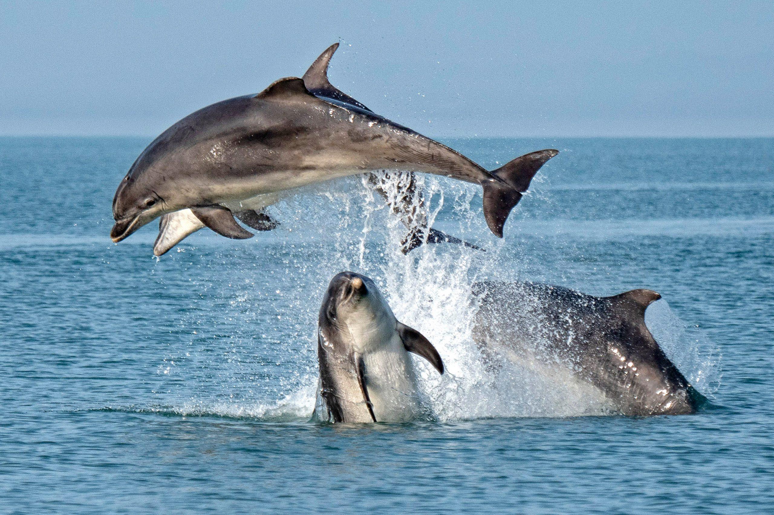 Cardigan Bay Bottlenose Dolphins
